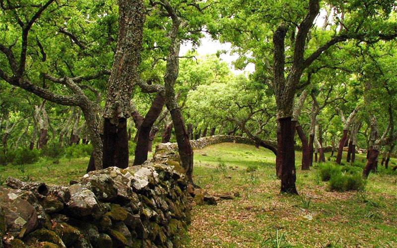 Parque-Natural-Los-Alcornocales-2