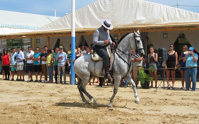 Monplamar-caballos-turismo-verano