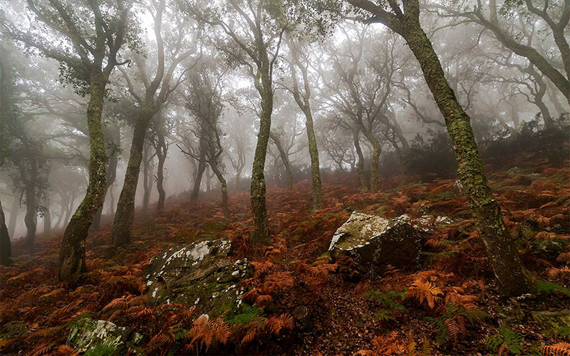 Campo-de-Gibraltar-naturaleza-foto-de-Jose-Luis-Garcia