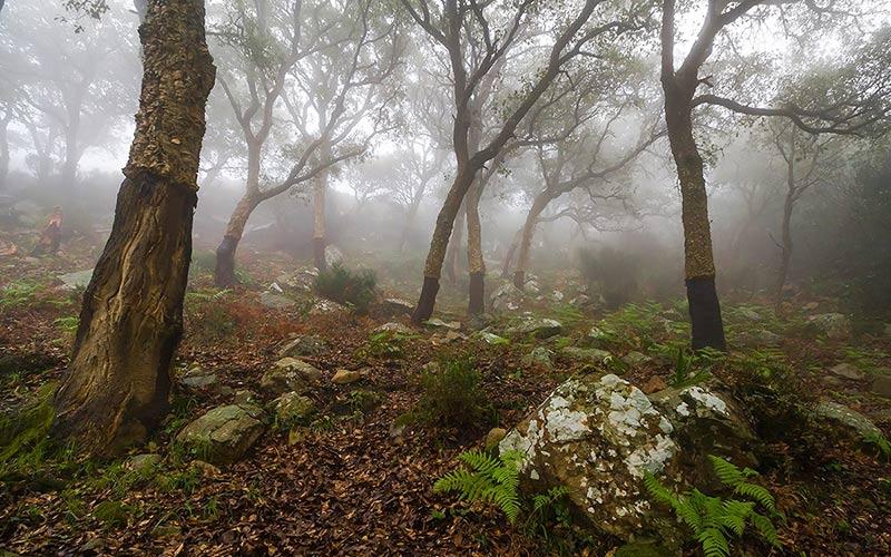 naturaleza-foto-de-JLuis-Garcia