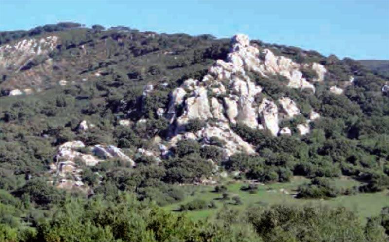 sendero-Murta-Los-Barrios-Alcala-de-los-Gazules