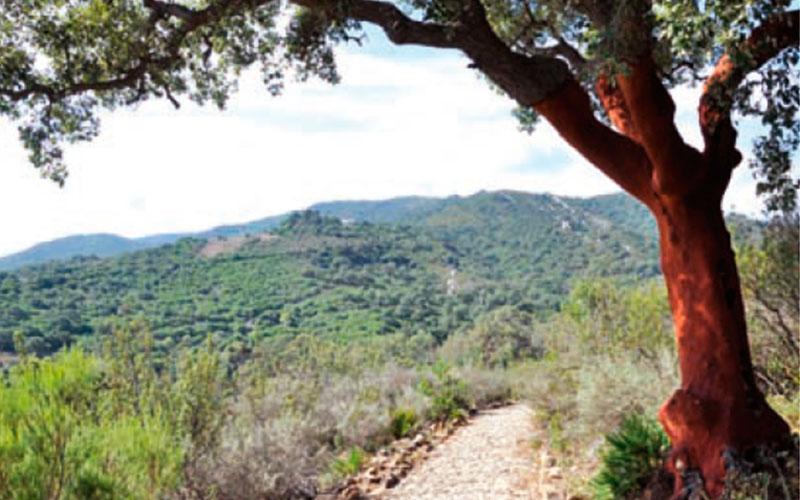 sendero-Castellar-de-la-Frontera