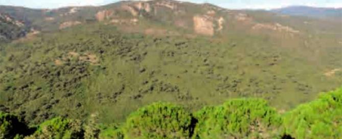 sendero-Canuto-Largo-en-Jimena-de-la-Frontera