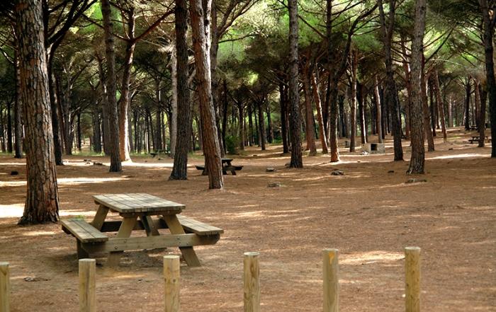 San-Roque-Pinar-del-Rey