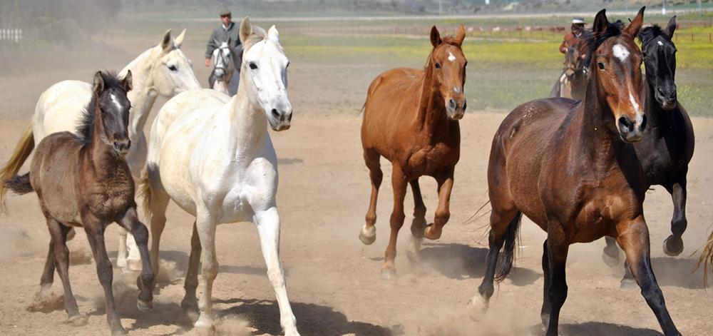 caballos foto de Cadiz Turismo