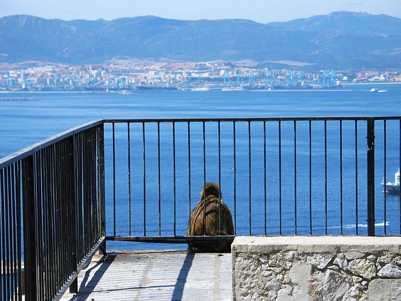 A él también le gusta la Bahía de Algeciras (José Luis GC)