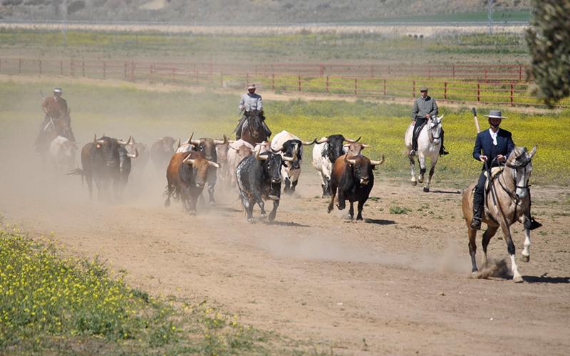 caballos toros foto de Cadiz Turismo