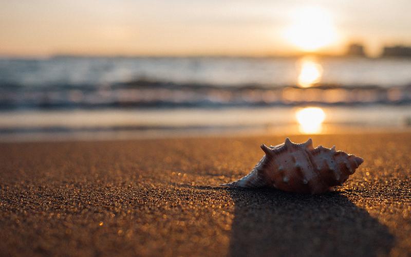 playa arena caracola sol