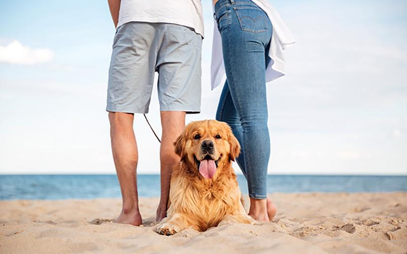 playas para perros en Andalucia 1