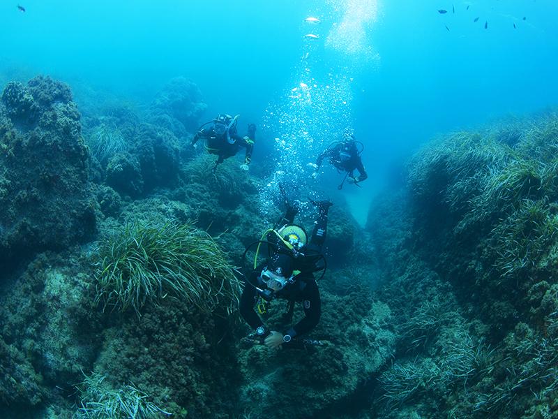 La Andalucía subacuática (Junta)