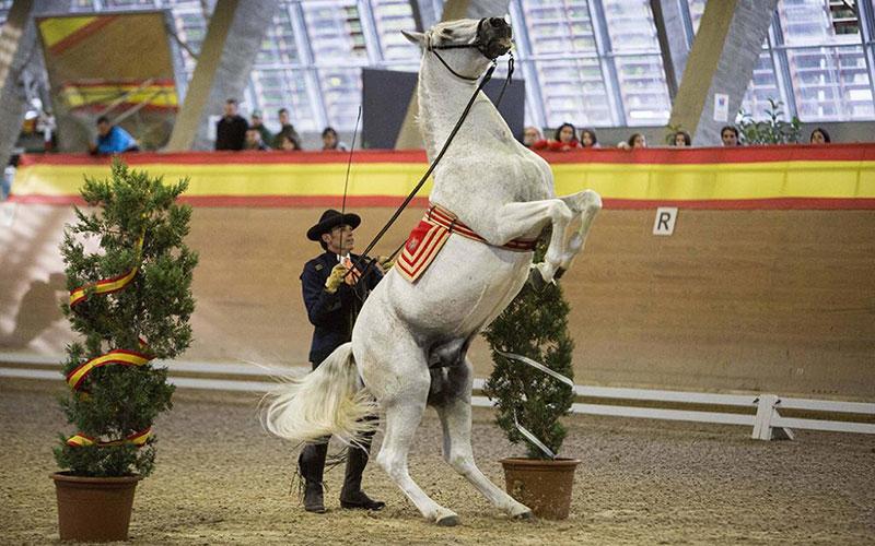 caballos-doma-foto-de-junta-de-andalucia
