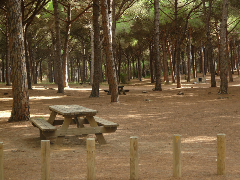 San-Roque-Pilar-del-Rey