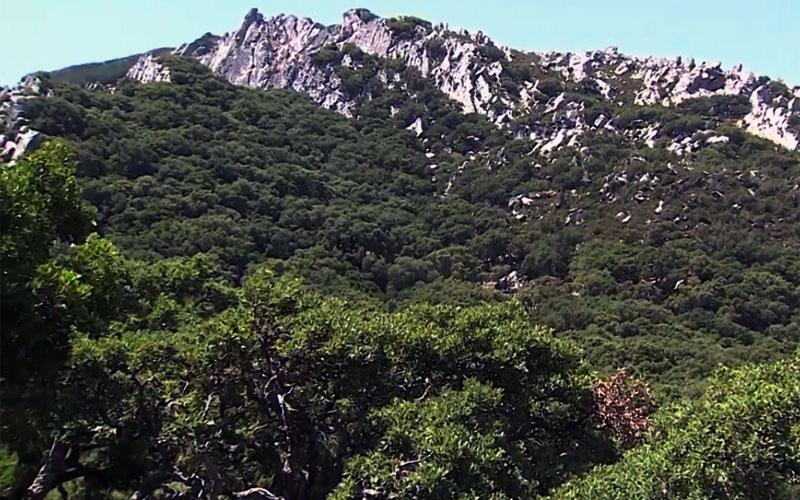 Los-Alcornocales
