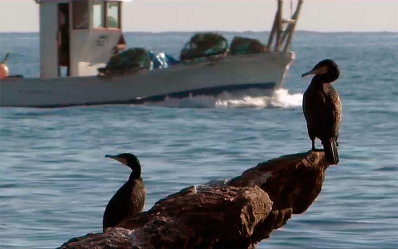 Avistamiento-aves-Estrecho-de-Gibraltar