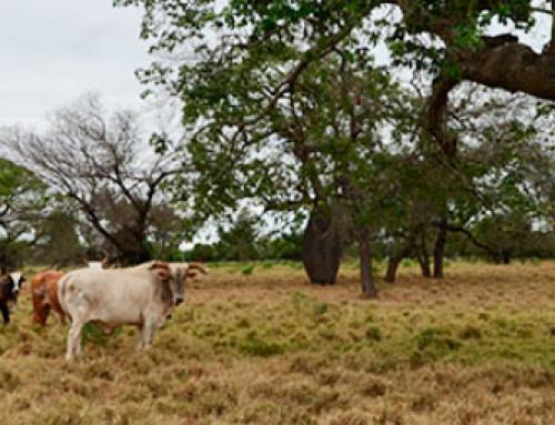 El Chaco paraguayo, de menonitas y ayoreos. Por Enrique Vaquerizo