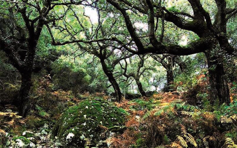 Algeciras-sendero