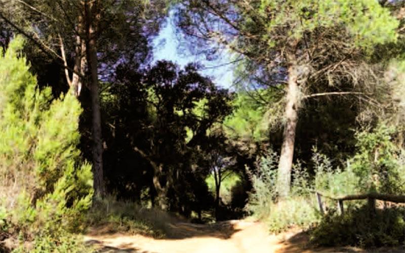 sendero-Pinar-del-Rey-en-San-Roque