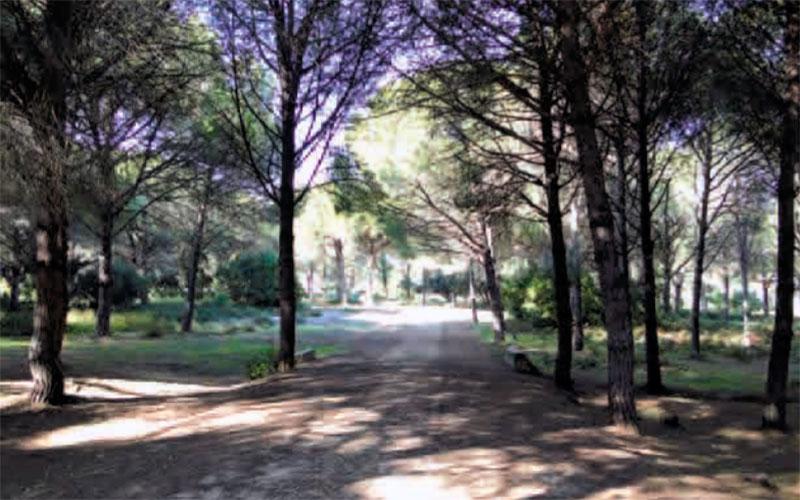 sendero-Cerro-del-Aguila-del-Pinar-del-Rey