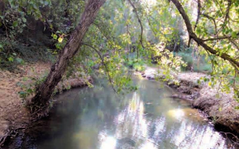 sendero-arroyo-del-alhaja-San-Roque