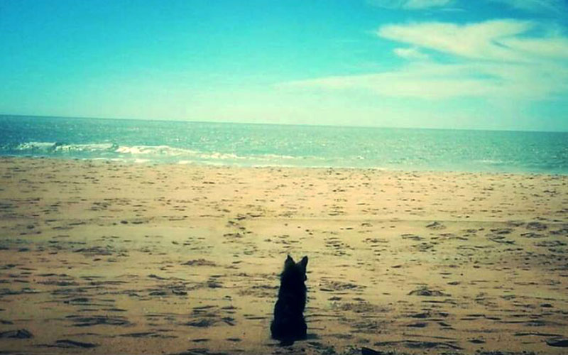 Monplamar-perros-playa