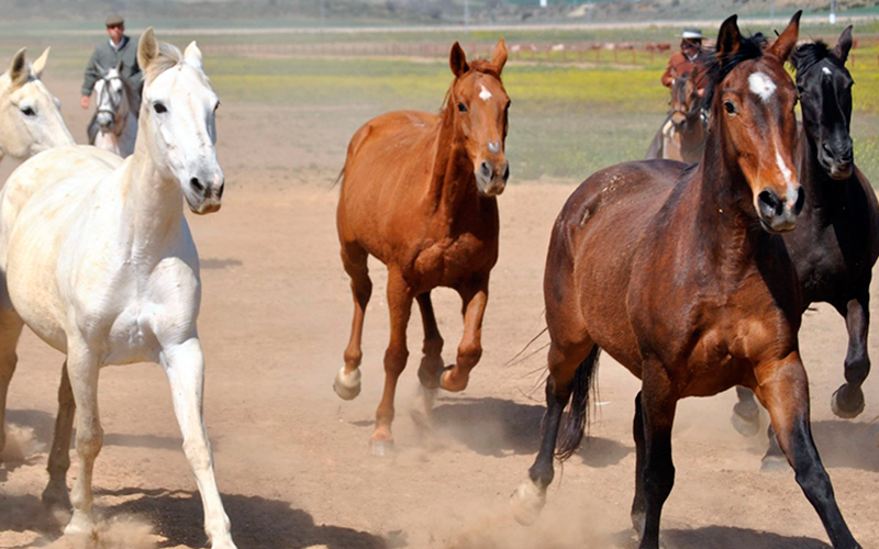caballos-foto-de-Cadiz-Turismo-pr