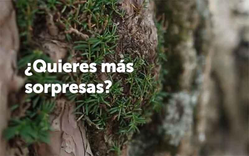 Andalucia-campana-sorpresa