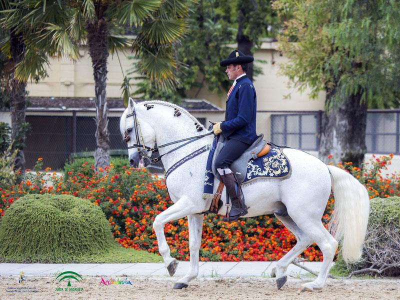 andalucia-caballos-foto-de-Junta-de-Andalucía