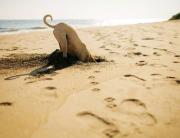 playa-perro-foto-de-andalucia-org
