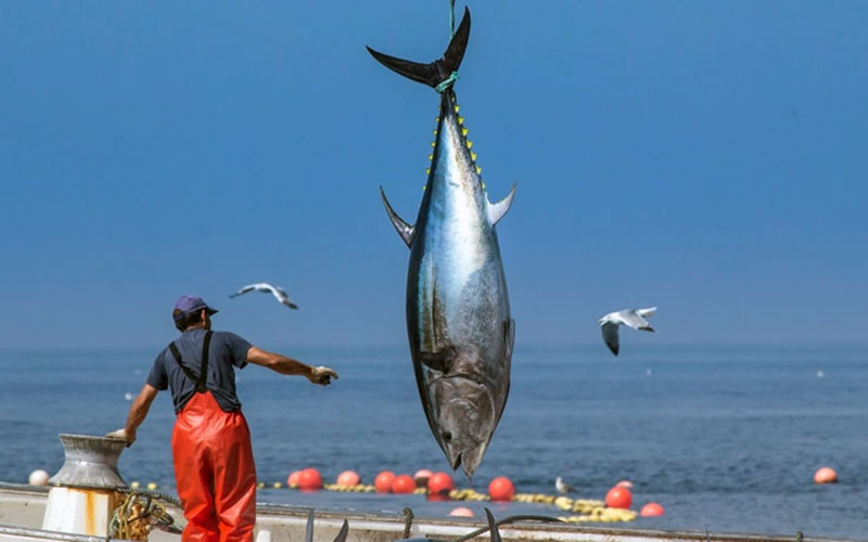 Monplamar-atun-Barbate-foto-de-Jose-Maria-Caballero