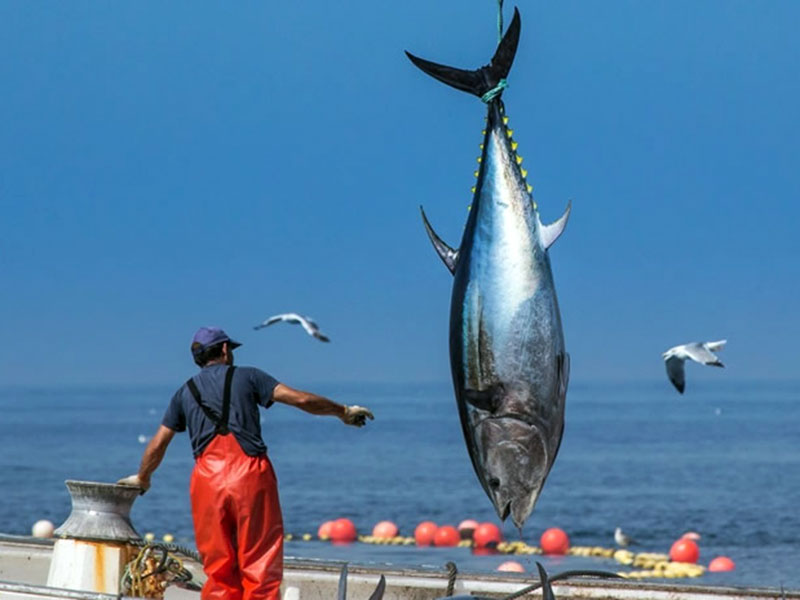 Monplamar-levanta-del-atun-foto-de-Jose-Maria-Caballero