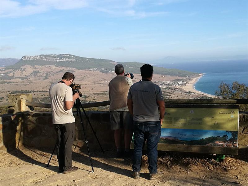 Turismo ornitológico (Cádiz Turismo)