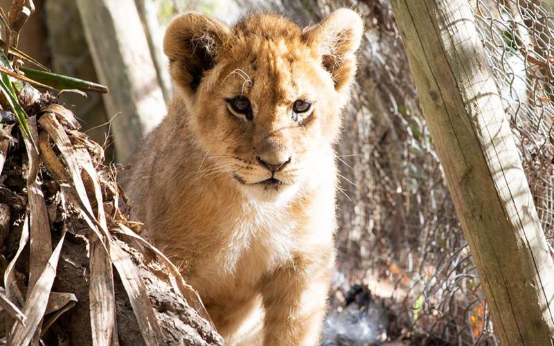 Reserva-Animal-La-Pequeña-Africa-en-Jimena-de-la-Frontera-01